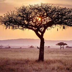 Afrika Reisen National Geographic Expeditions